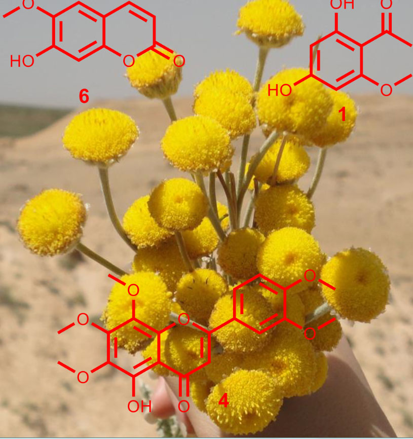 Phytochemical study of Tanacetum sonbolii aerial parts and the antiprotozoal activity of its components